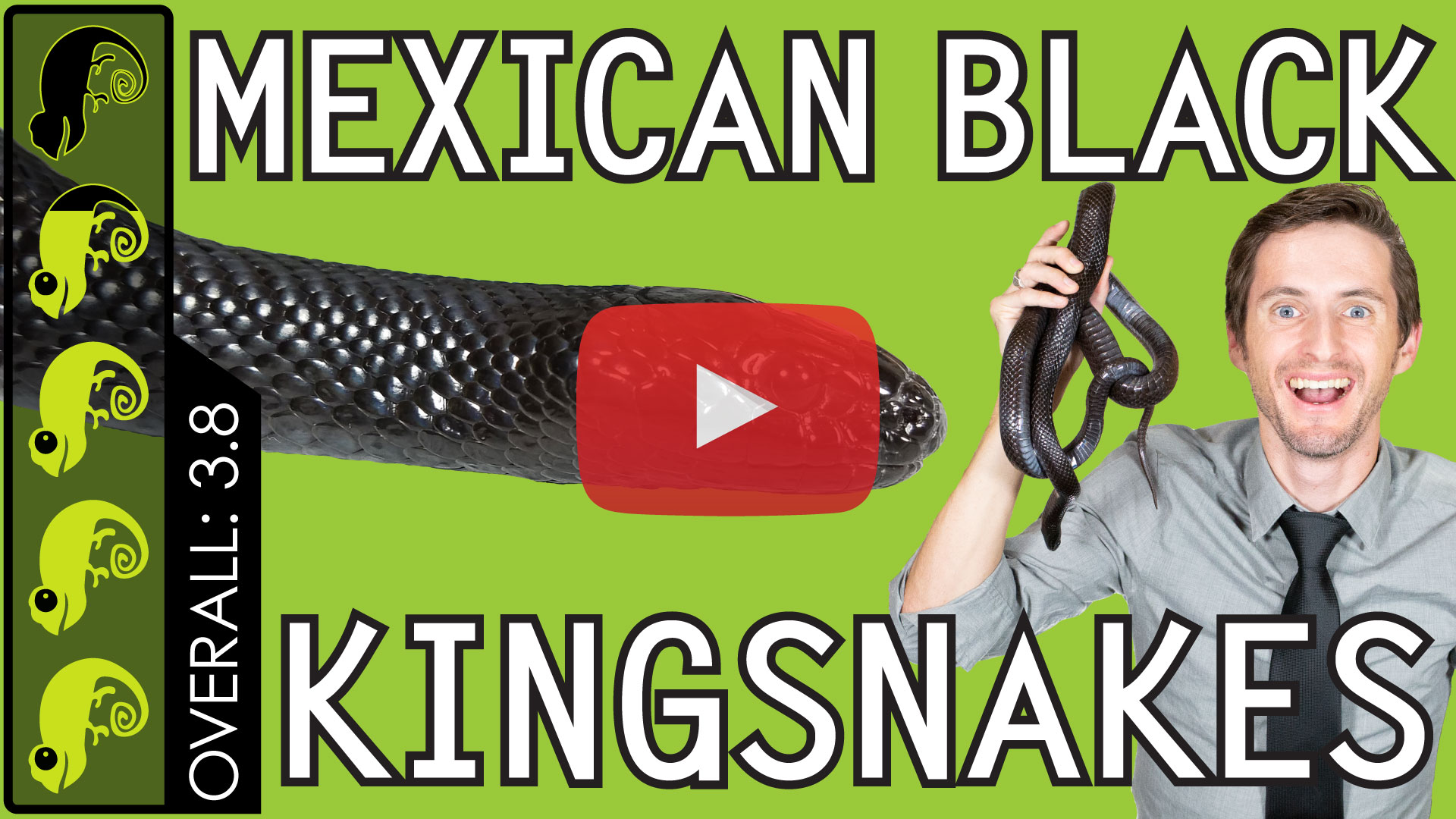 Mexican-Black-Kingsnake-Thumbnail-Play