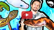 Every-Reptile-I-have---Part-3-Thumbnail-Play