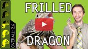 Frilled-Dragon-Overview-Thumbnail-Play